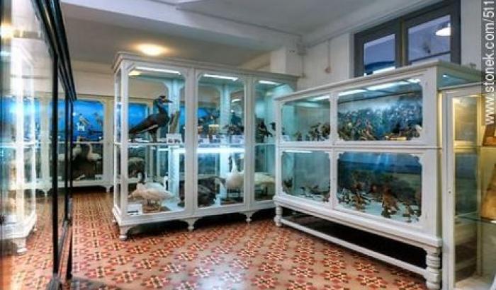 El Museo Nacional de Historia Natural (MNHN)